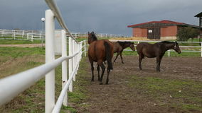Två hästar stock video