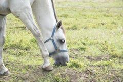 Två hästar Arkivfoton