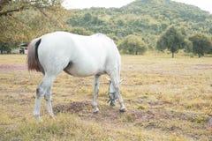 Två hästar Royaltyfri Fotografi