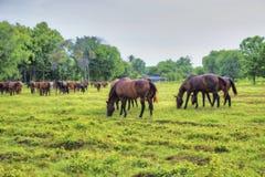 Två hästar Fotografering för Bildbyråer