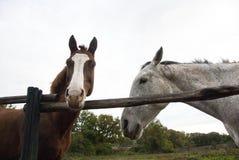 Två hästar, två färger royaltyfri fotografi