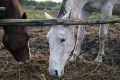 Två hästar, två färger royaltyfri foto
