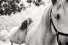 Två hästar i bygden Arkivbild