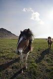 Två hästar II Royaltyfri Fotografi