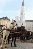 Två hästar på den Wien gatan arkivfoto