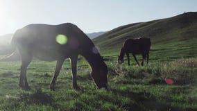 Två hästar på solnedgången som äter gräs lager videofilmer