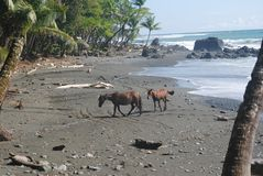 Två hästar på stranden arkivfoto