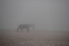 Två hästar som är borttappade i tät dimma Arkivfoton