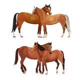 Två hästar som ansar sig vektor illustrationer