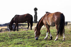 Två hästar som betar i frotn av en moai Arkivfoton