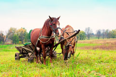 Två hästar som exploateras till en vagn Fotografering för Bildbyråer
