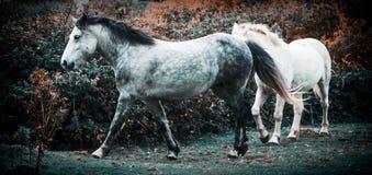 Två hästar som spelar i ett fält royaltyfri fotografi