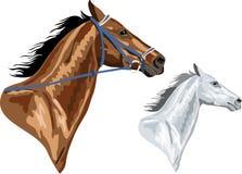 Två hästhuvud - bryna med tygeln och vit Royaltyfri Fotografi