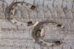 Två hästskotryck Arkivfoto