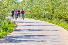 Två höga par som cyklar till och med en holländsk blommande fruktträdgård Royaltyfri Foto