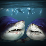 Två hajar har en gyckel arkivbild