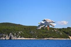 Två hav-fiskmåsar med bred spridning för vingar är flyget över vatten fotografering för bildbyråer