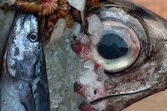Två havsfiskar av olika format: huvudet av en stor fisk med en blåtira, över det ligger en liten fisk av grå våg och någon Royaltyfri Foto