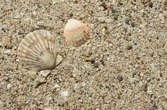 Två havsskal på sand Arkivfoton
