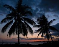 Två hawaianska palmträd på solnedgången på en strand Arkivfoton