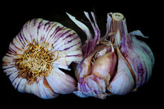 Två hela garlics Arkivfoton