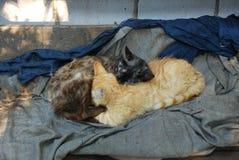 Två hemlösa kattungar som är ljust rödbrun, och mörk brun sömn som det Ying yang tecknet royaltyfri bild
