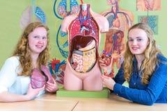 Två holländska studenter som visar torsohjärta och lungor royaltyfri bild