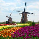 Två holländska väderkvarnar över tulpanfält Arkivbilder