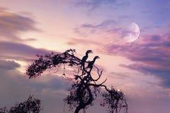 Två horn- räkningfåglar på trädet i afton Royaltyfria Bilder