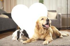 Två hundar med vit hjärta Arkivbilder