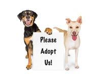 Två hundkapplöpning med adopterar oss tecknet arkivfoton