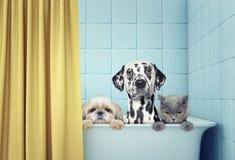 Två hundkapplöpning och katt i badet Royaltyfri Bild
