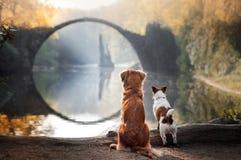 Två hundkapplöpning på bron Arkivbilder