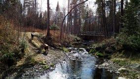 Två hundkapplöpning som kör förbi The Creek Fotografering för Bildbyråer