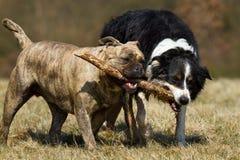 Leka hundkapplöpning Royaltyfri Bild
