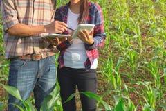Två jordbruks- forskare studerar tillväxten av havreplommoner royaltyfri foto