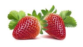 Två jordgubbar med många sidor som isoleras på vit bakgrund Royaltyfri Bild