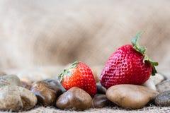 Två jordgubbar som sitter på en säng av små stenar Arkivbild