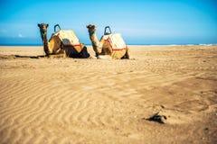 Två kamel arkivbild