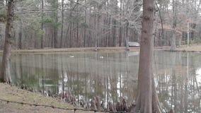 Två kanadensiska gäss på det kalla dammet i Arkansas royaltyfri bild