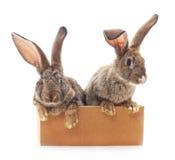 Två kaniner i en ask arkivfoto