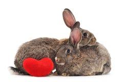 Två kaniner och hjärta arkivbild
