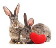 Två kaniner och hjärta royaltyfri fotografi