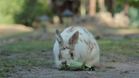 Två kaniner på jordningen arkivfilmer