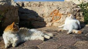 Två katter är solbada och värma sig i solen Royaltyfri Foto