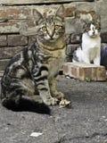 Två katter Royaltyfria Foton