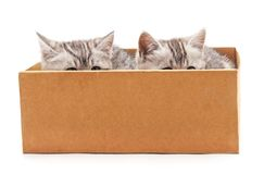 Två katter i en ask Royaltyfria Bilder