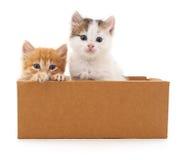 Två katter i en ask Royaltyfria Foton