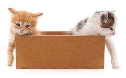 Två katter i en ask Arkivbilder