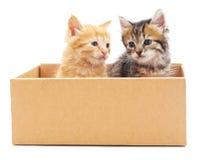Två katter i en ask Royaltyfri Bild